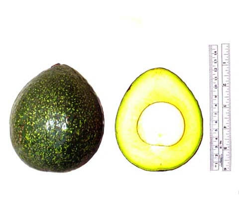 Nabal avocado details